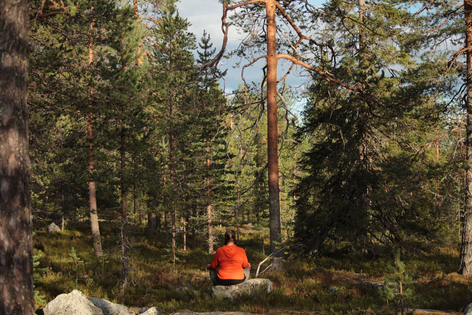 Metsänpeili(c)ArcticSky.png